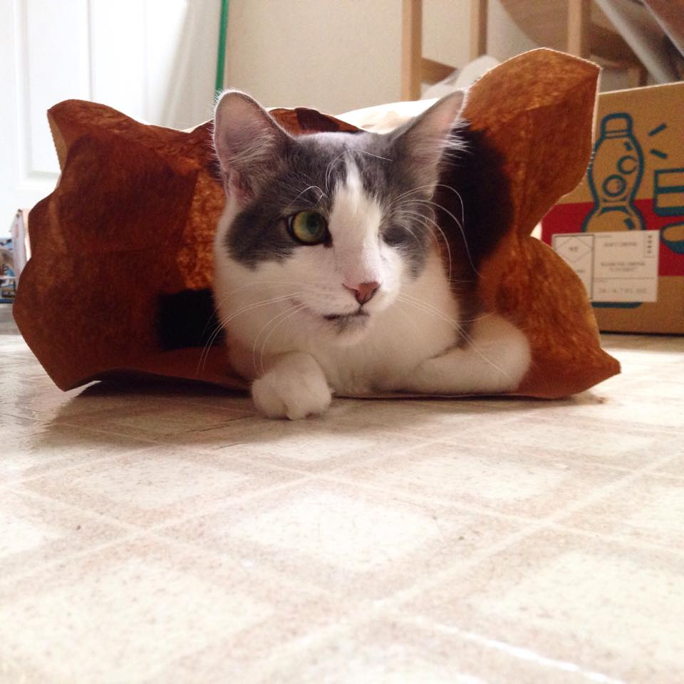 Cat spay and neuter van ct