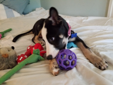 Josie has all the toys and attention she wants these days, thanks to being rescued off the streets.