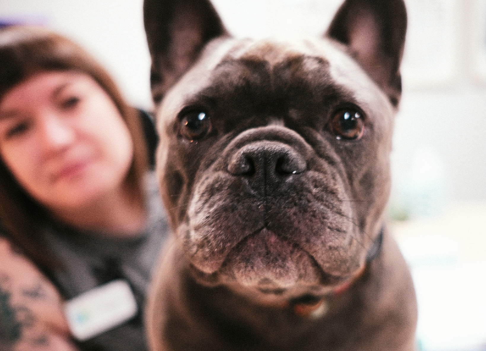 Fleas, ticks, and mosquitoes can come between us and our pets.