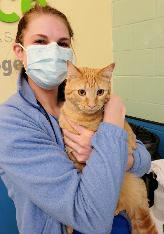 Hugging the dogs and cats who come to visit is a staff favorite.