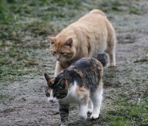 Pet Resource Center of Kansas City helps manage community cats with our Trap-Neuter-Return program to control the spred of feral cats and disease.