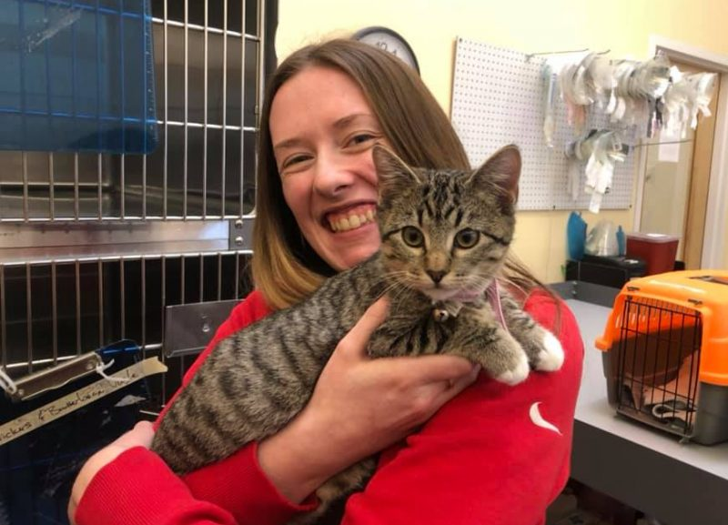 woman holding grey tabby kitten