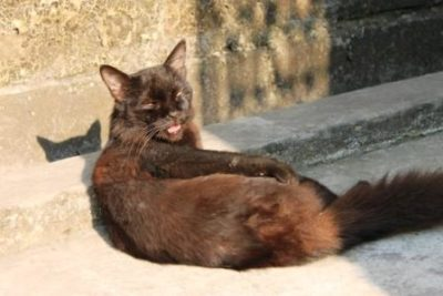 A black cat with rusty fur