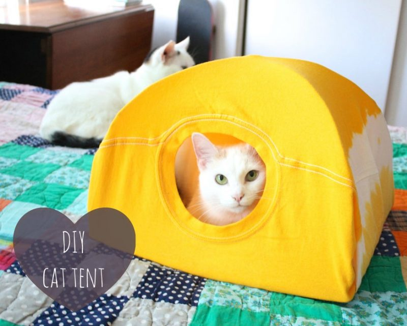 a cat sits in a tent made from a yellow t-shirt