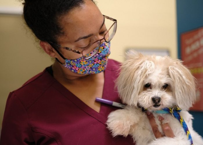 Our veterinarians and all of our staff love dogs and cats and want to help their human friends with whatever they need.