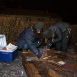 Feral cat trapping in Kansas City