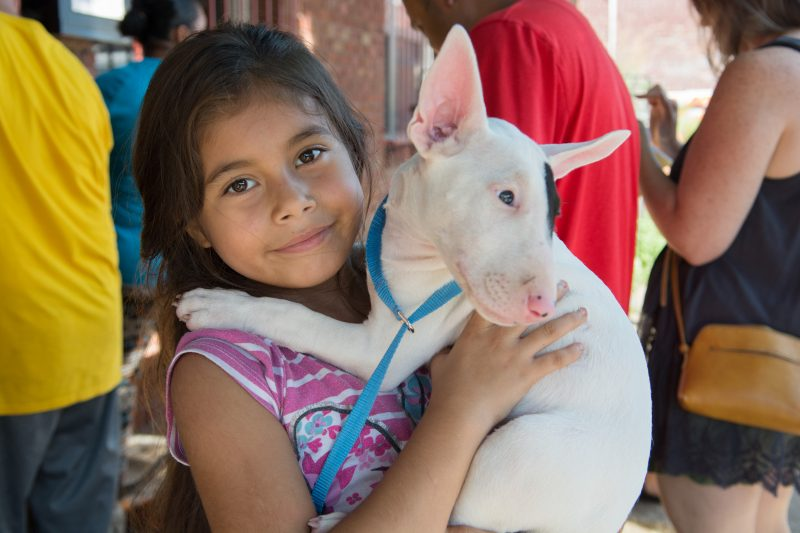 young girl with bull terrier puppy