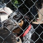 A dog behind a fence