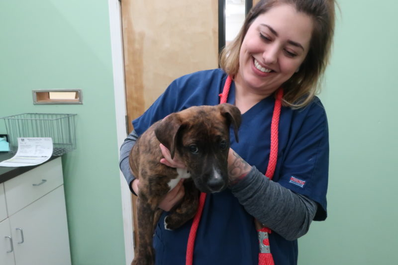 There is always a steady stream of puppies and kittens coming to the clinic for booster vaccinations.
