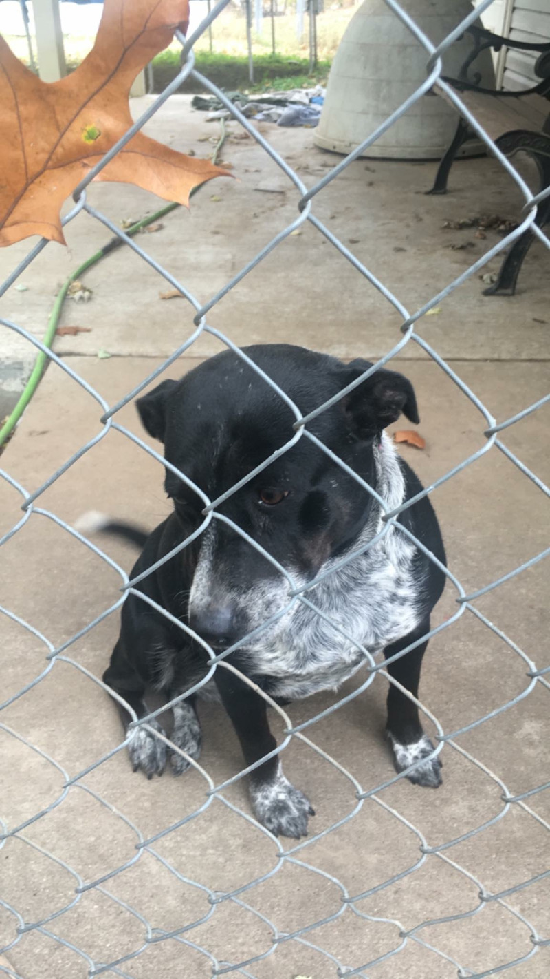 This abandoned dog was one of two found by Jennifer.