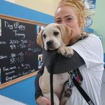 owner giving her yellow lab puppy a kiss on the head