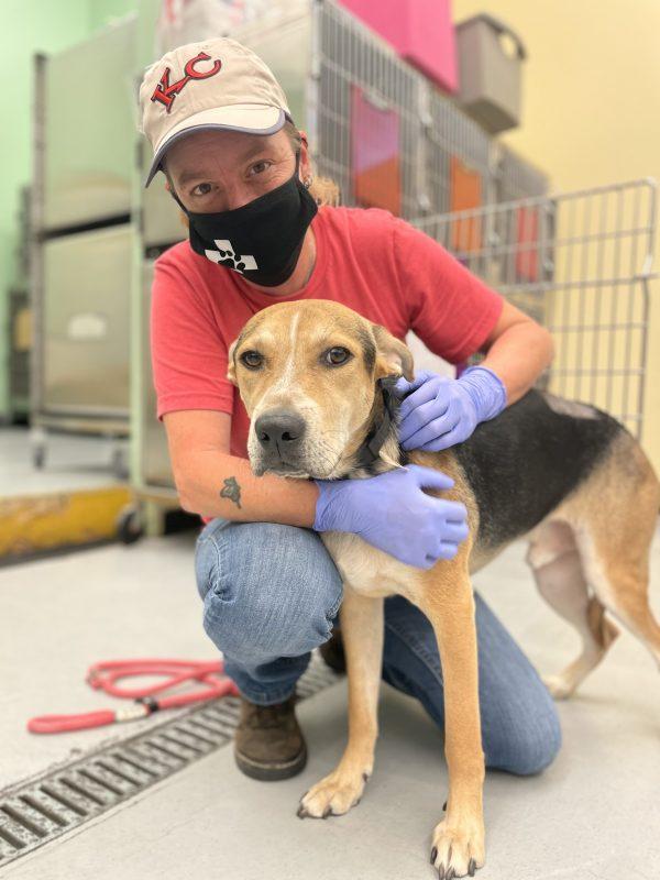 tan and black mixed breed dog at vet