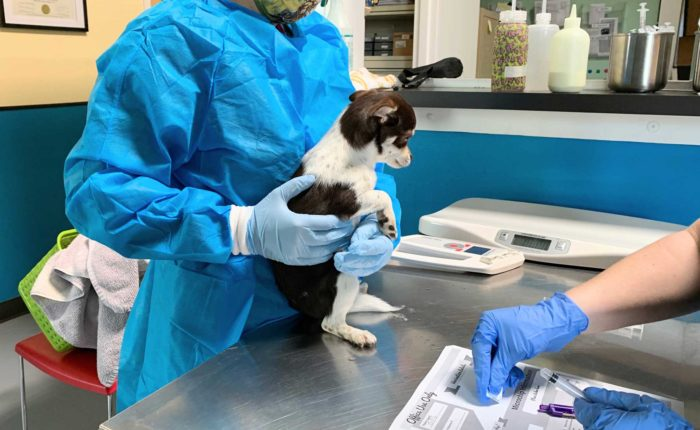 A woman in medical scrubs holds a puppy.