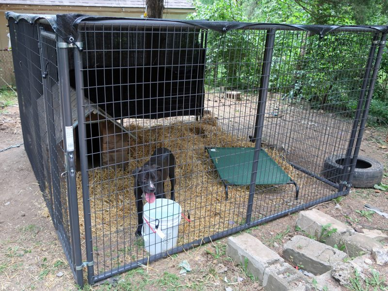 10 foot by 10 foot dog run with a dog house, bed, water bowl and straw inside