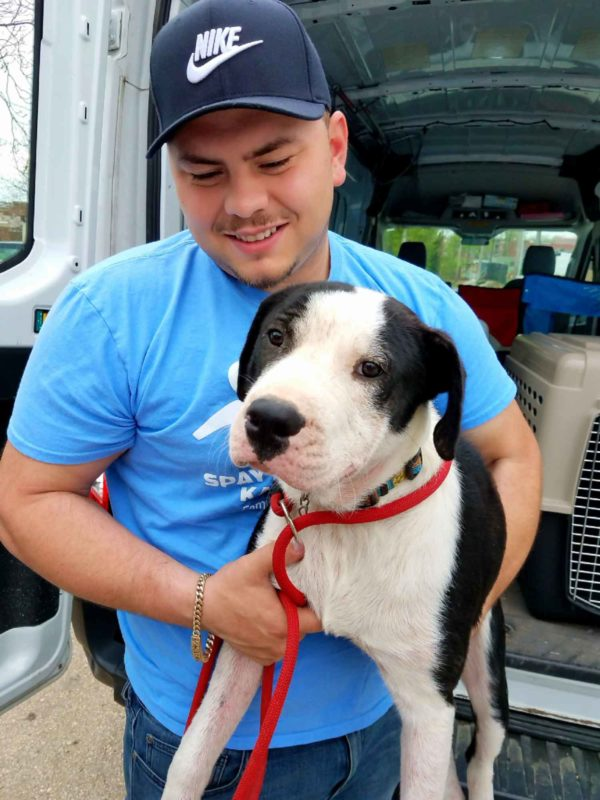 A man is lifting a black and white dog out of a transit vehicle.