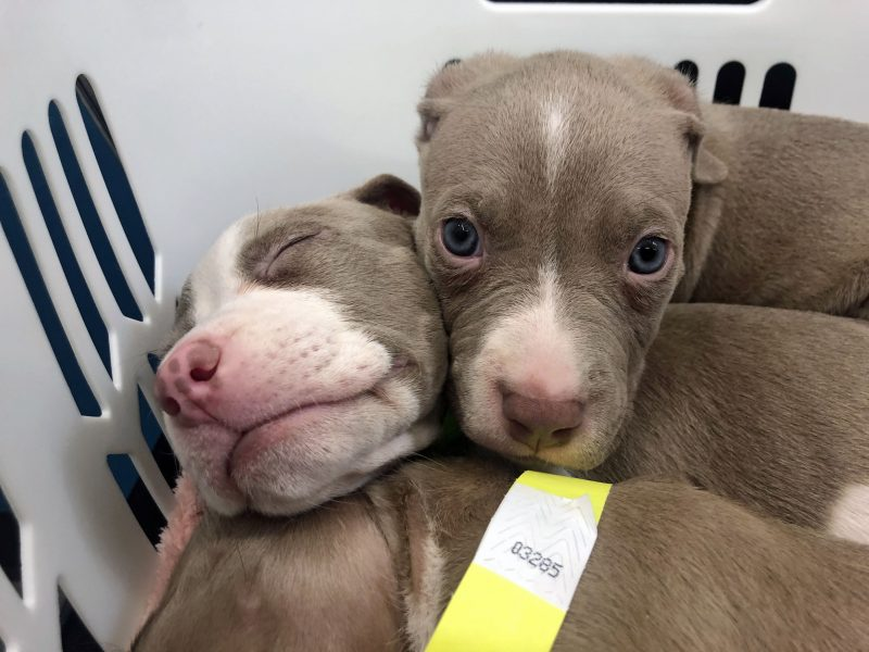 Puppies cuddling