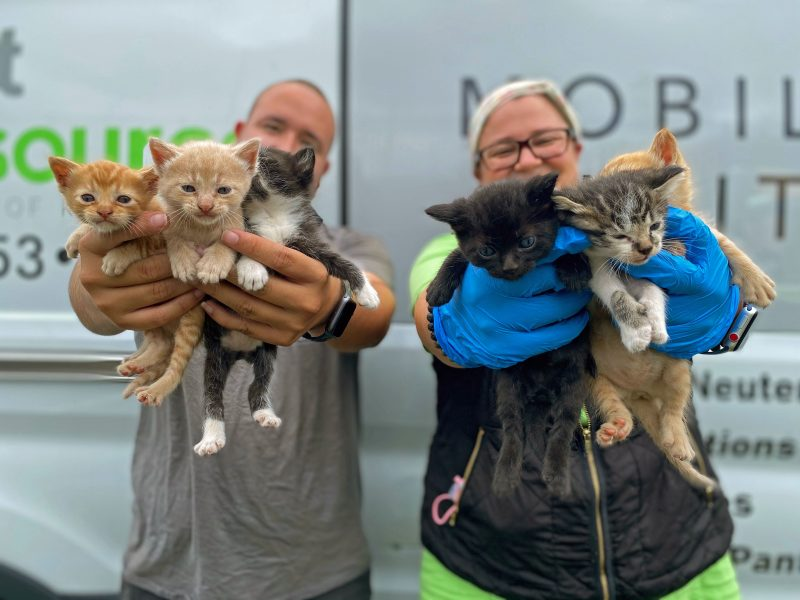 six kittens rescued from a window well