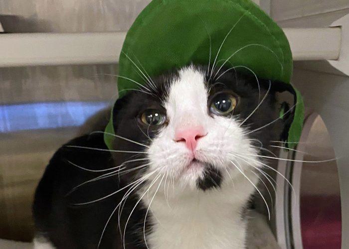 tuxedo cat wearing a hat