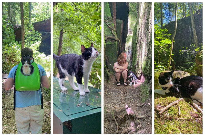 tuxedo cat hiking and exploring the woods