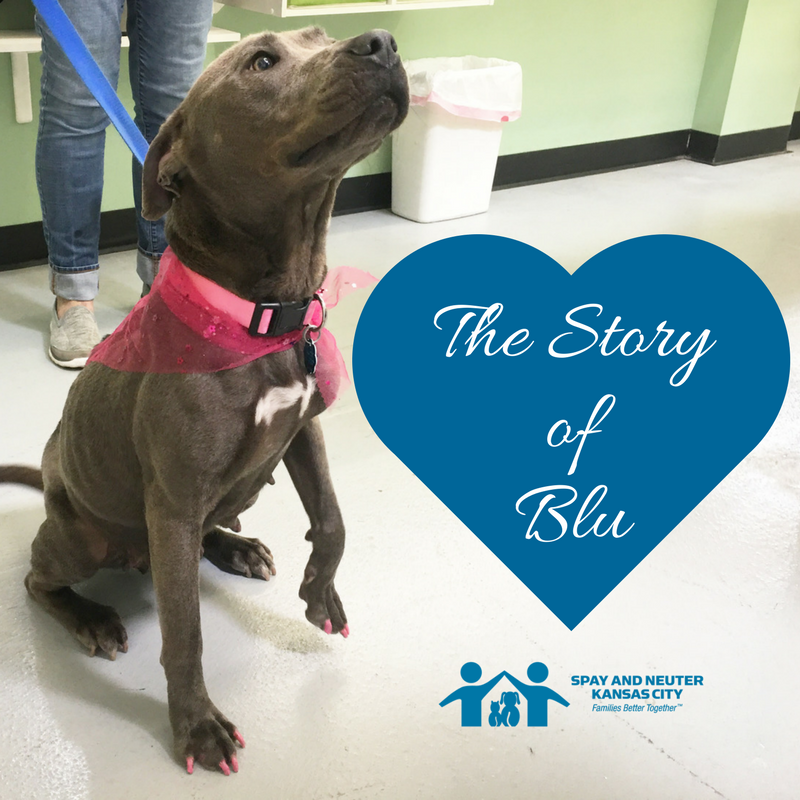 "Blu wags her tail, looking at something off screen. A blue heart with the words ""The Story of Blu"" is next to her."