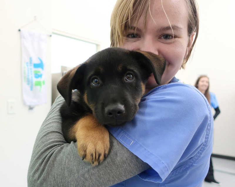Pet Resource Center of Kansas City is made up of a bunch of compassionate, understanding people who want to help people care for their dogs and cats.