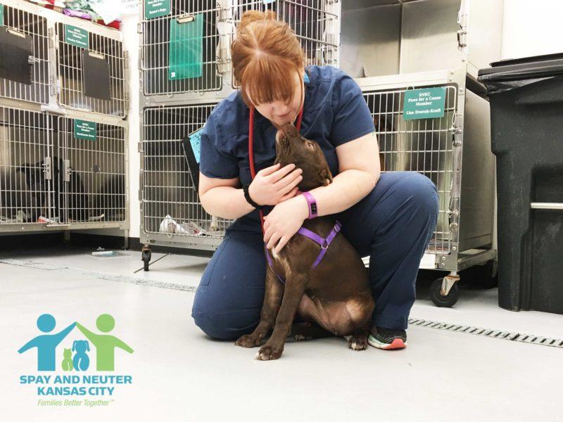 Amanda comforts a medium-sized brown dog