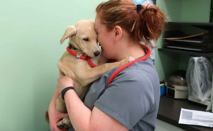The Pet Resource Center is here to help (and hold) your dogs and cats.