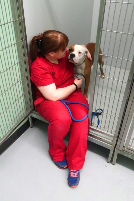 A vet tech comforts a scared dog