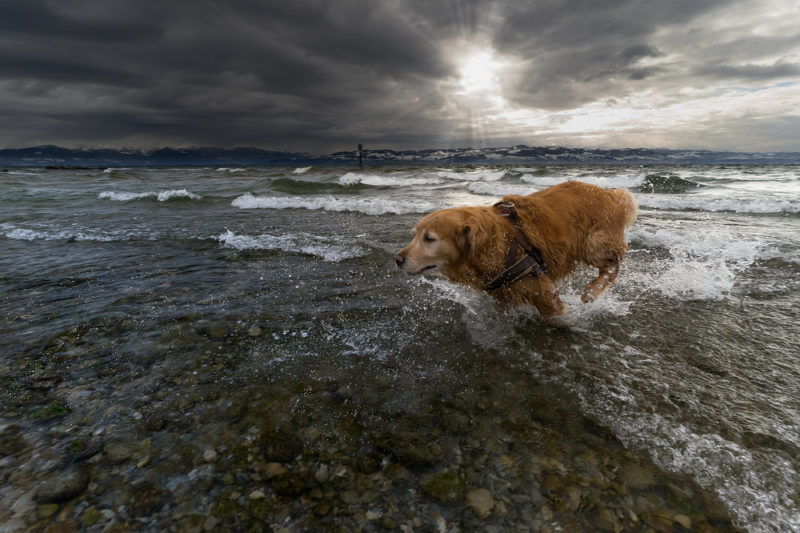 A dog who loves the water can be a joy to watch.
