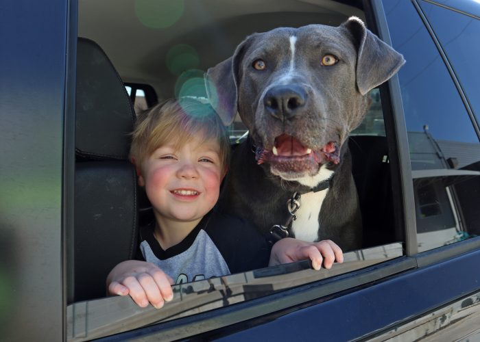 young boy and gray pit bull