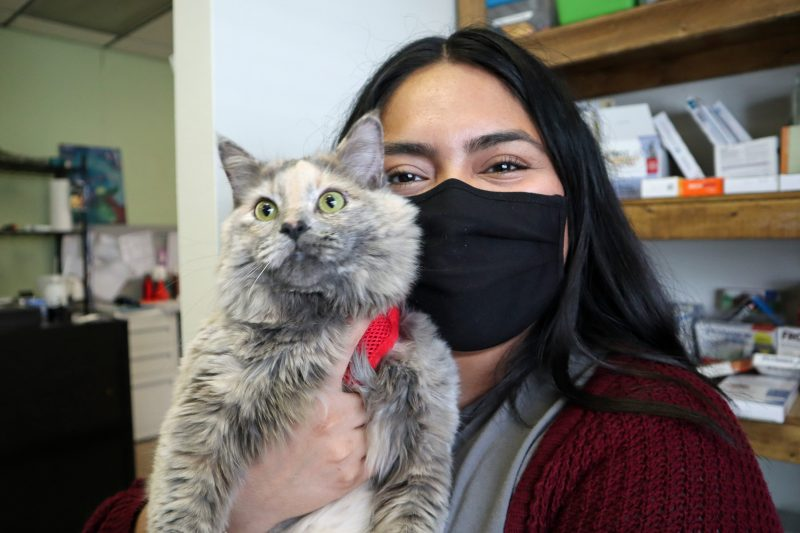 woman hugging dilute calico