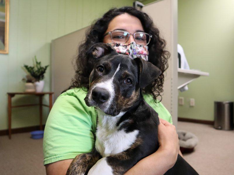 basset hound pit mix puppy