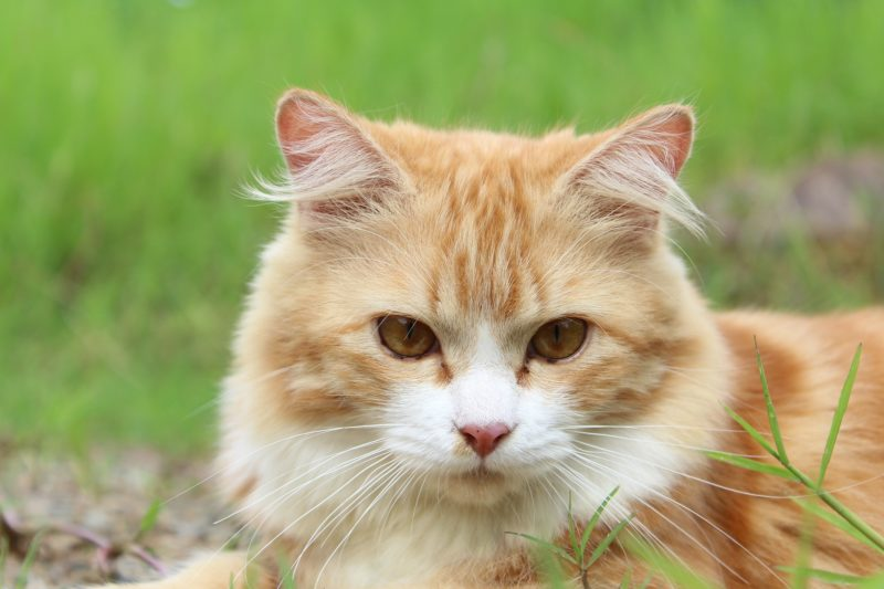Cats and dogs are at risk of parasites.