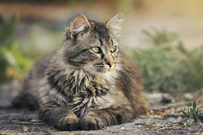 Cats will pick certain spots on a lawn to repeatedly visit.