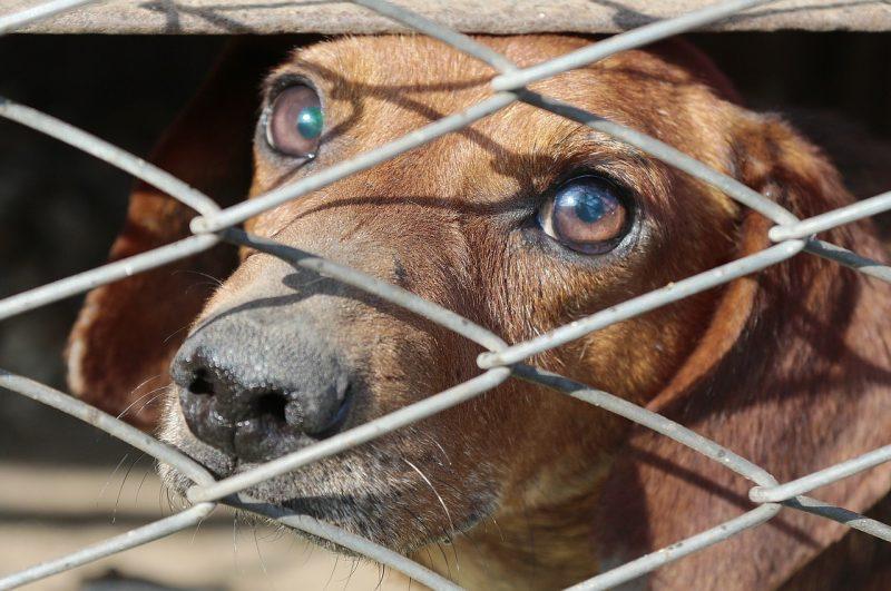 Animal welfare has taken a few steps backward in KC.