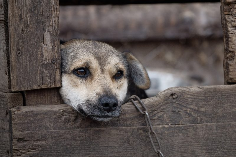 Animals left to suffer need to be addressed urgently.