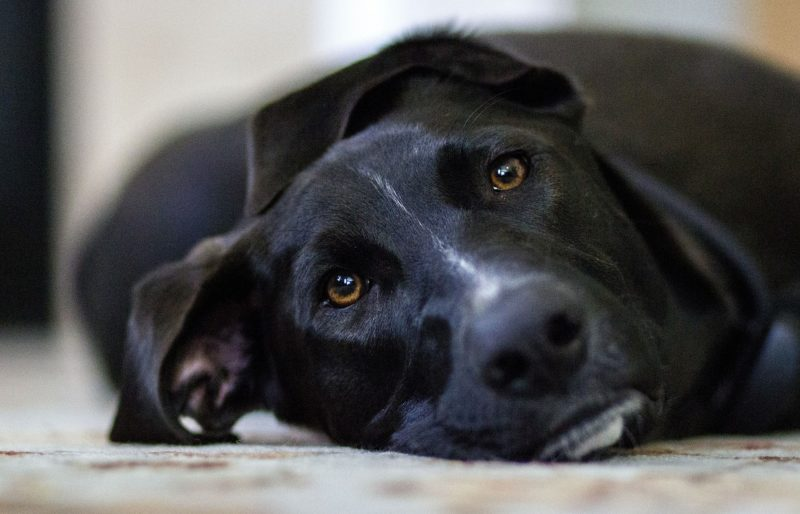 Our dogs and cats need help to prevent parasite infestations.