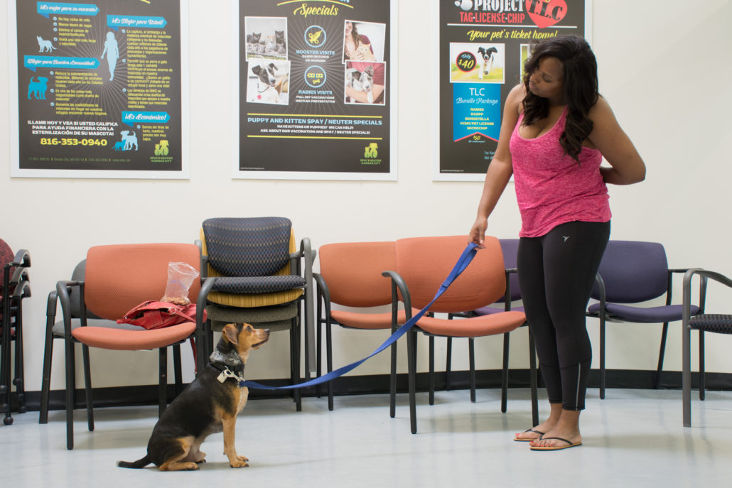 Proper dog training can be a life saving skill for families, and Spay and Neuter Kansas City provides affordable training classes for your dog.