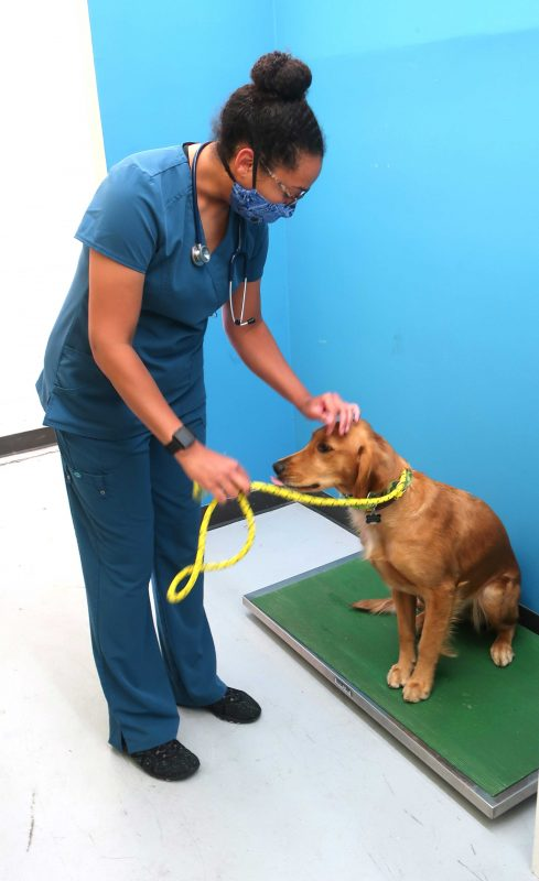 a doctor pets a dog that's standing on a scale