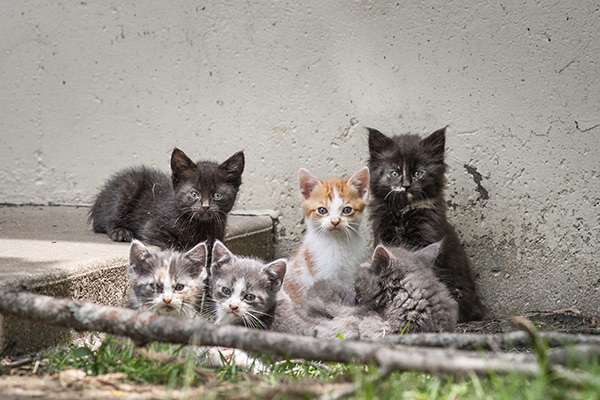 The Trap, Neuter and Return (TNR) program at Spay and Neuter Kansas City helps control the population of community cats and disease.