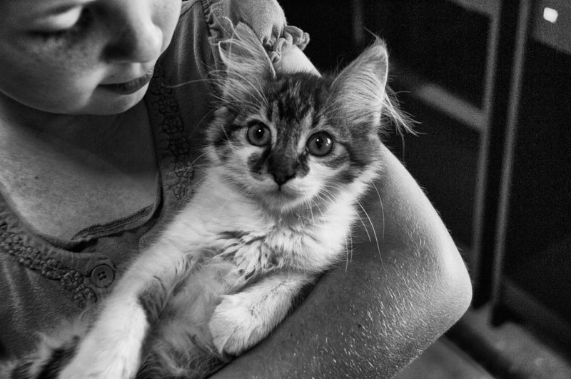 Dogs and cats want to be with their people,.