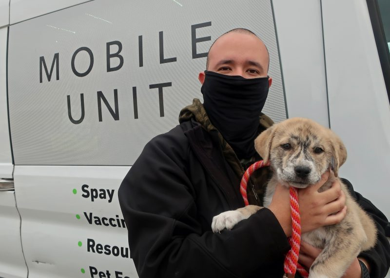 vaccinating mixed breed puppy on mobile unit