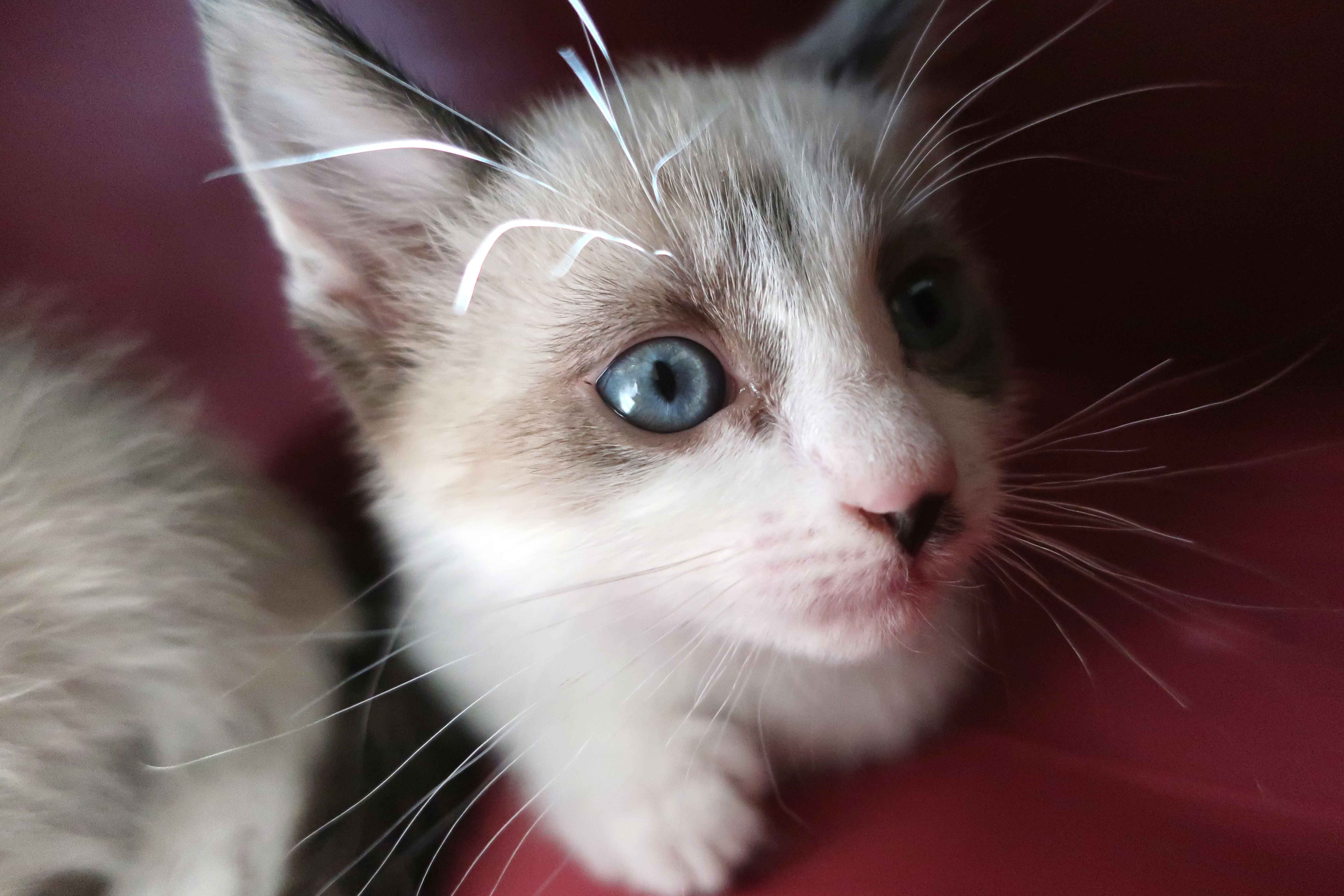 a kitten peers up at the camera