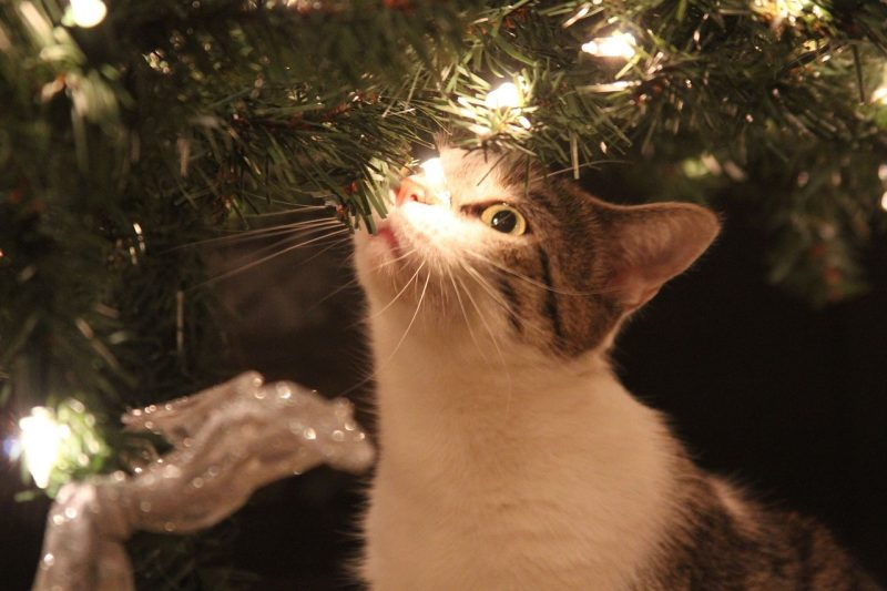 Cats love all the fun things to play with on a Christmas tree