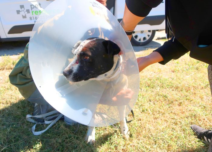 A dog wears a plastic cone