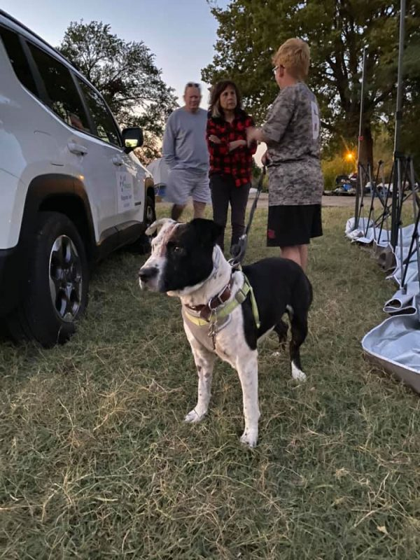A dog stands in a field while people talk behind him