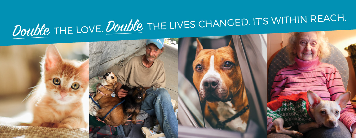 Matching Grant - Double Your Impact and help homeless pets - save lives!