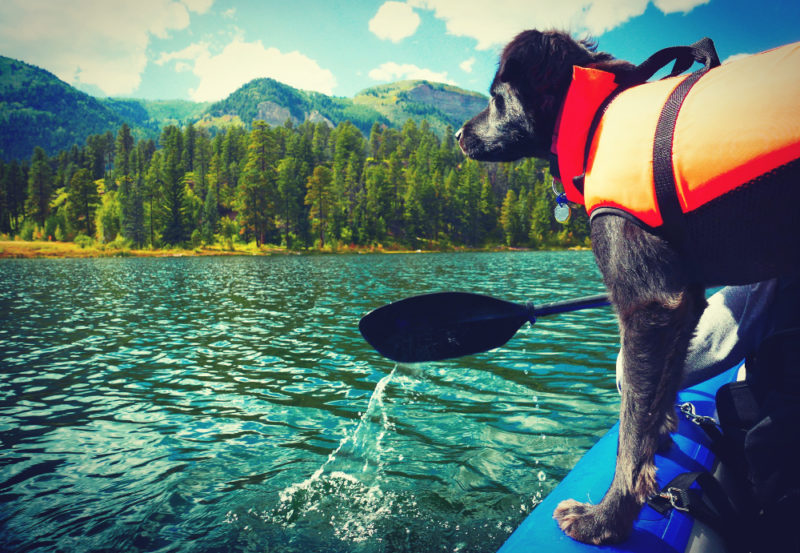 A personal flotation device is a smart move anytime your dog is one or near the water.