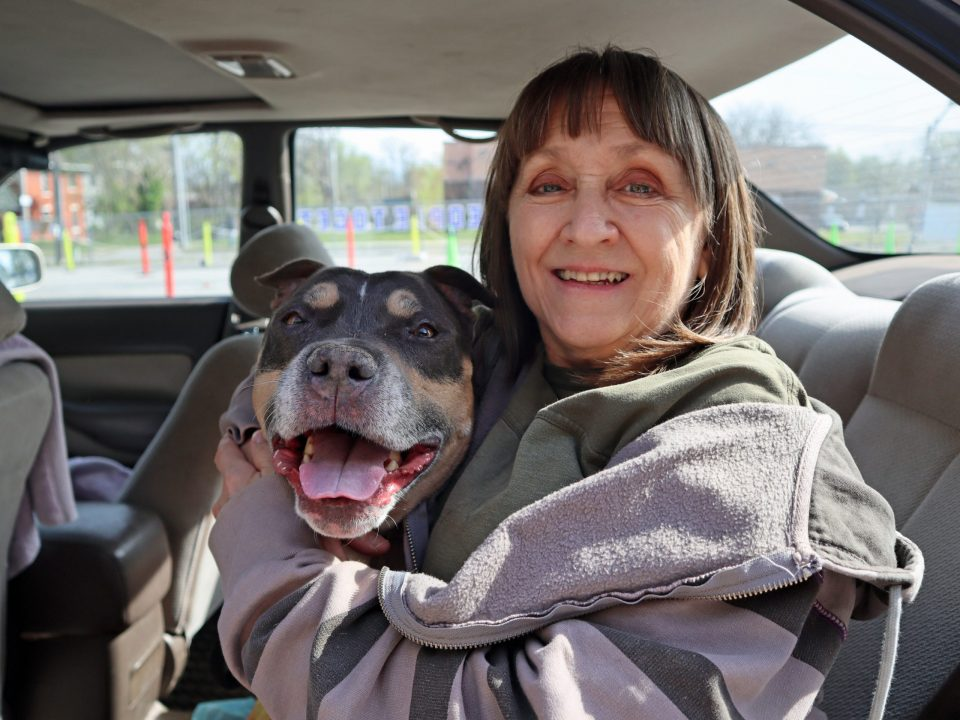smiley blue fawn pit bull with happy owner