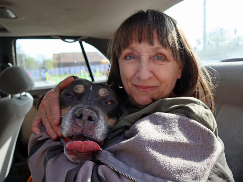 happy blue fawn pit bull with her owner